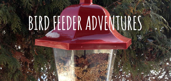 Winter Bird Feeder Adventures