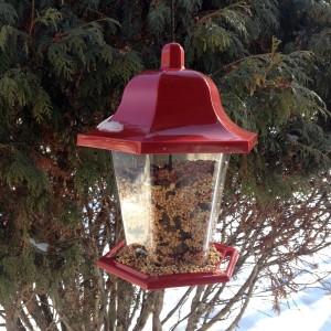 My little red bird house