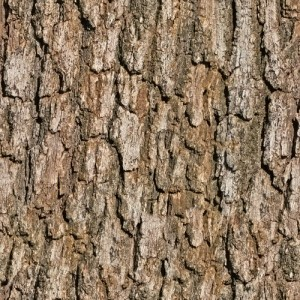 background bark
