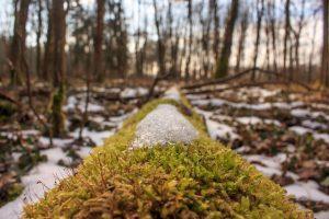 Mossy tree frost
