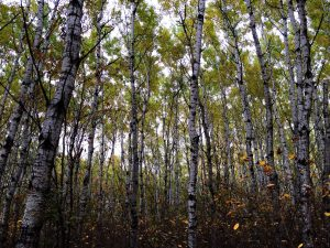 Birds Hill Park Forest