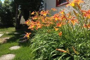 Daylily Fairy Flower Garden