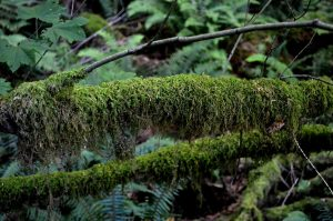 Moss in the trees