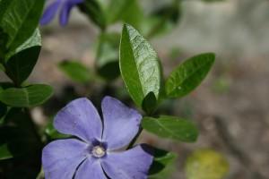 Periwinkle Fairy Flower Garden