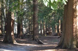 Bear Creek Park Trees