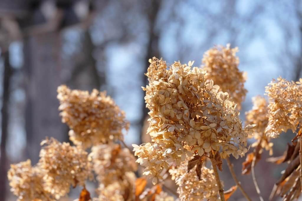 Cold flowers